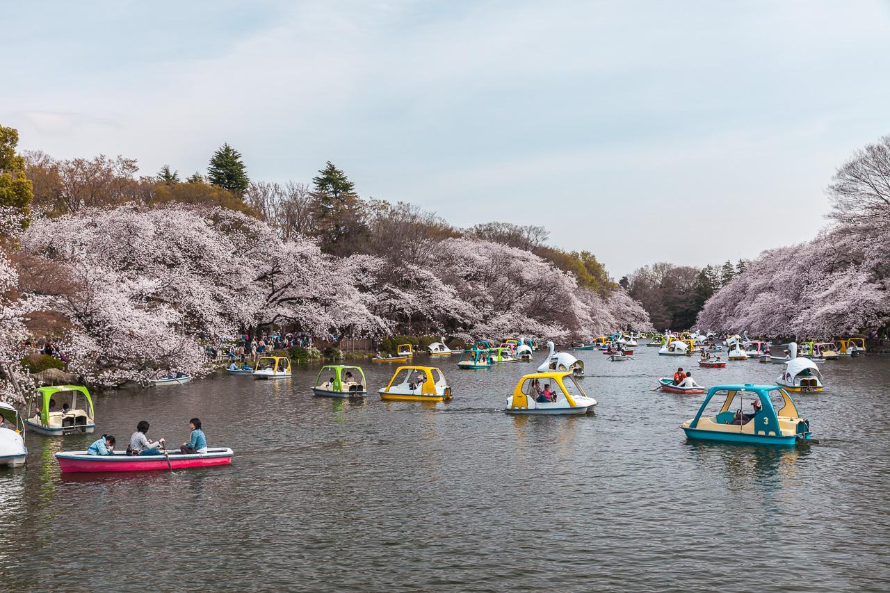Japan-in-Berlin-Zartrosa-Lichtblau-10-Inokashira-Park-IMG_2680